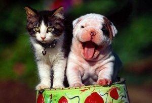 perros-gatos-convivencia-amigos-consejos-art