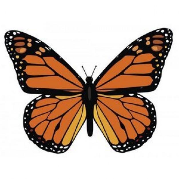 mariposa-monarca_9914