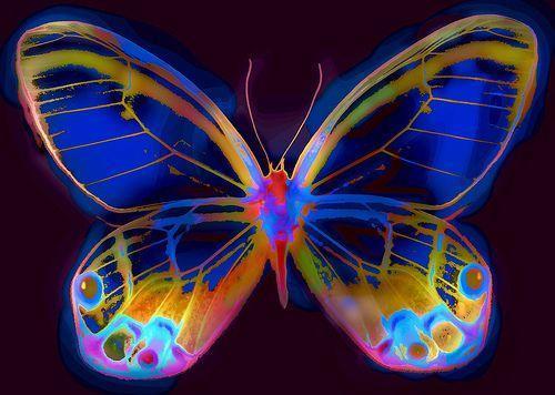 mariposa_multicolores-12815
