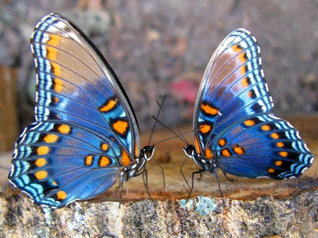 mariposas-23810
