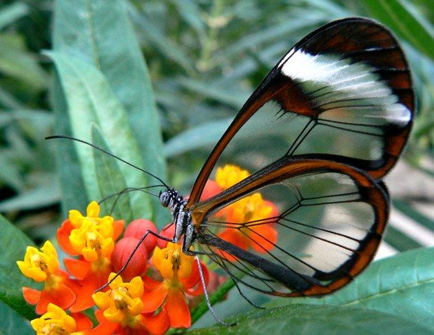 mariposasf16e7708-59ca-4109-8e85-c3dfadbb86c4_mariposas-1