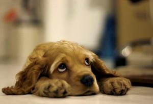 perro-triste_small