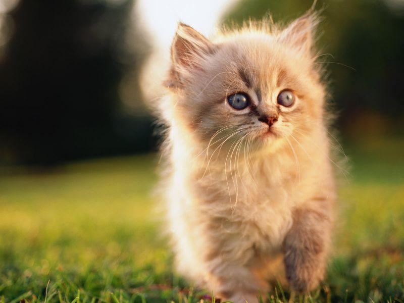 gatito tierno whatsapp 4