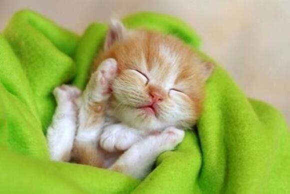gatito tierno whatsapp