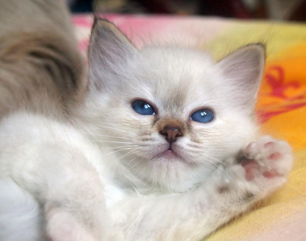 Animales Bebés: Imágenes Tiernas Para Descargar Y