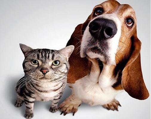 sintomas-de-la-alergia-en-los-animales