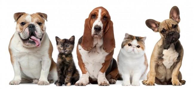 1378381820_542826867_1-perros-cachorros-peluqueria-canina-la-mora