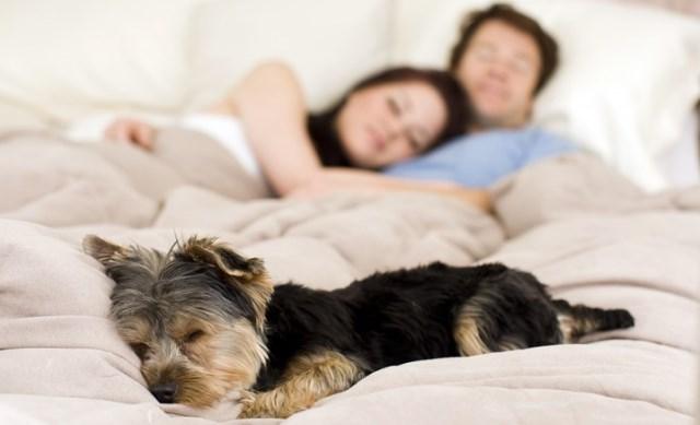 Azul-Ambientalistas-Es-peligroso-dormir-con-tu-mascota
