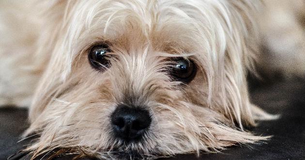 Los-perros-son-1935000