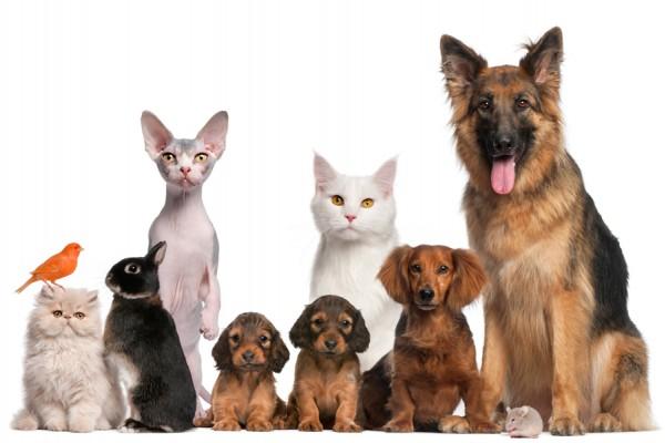 Nota-6381-anos_que_viven_las_mascotas