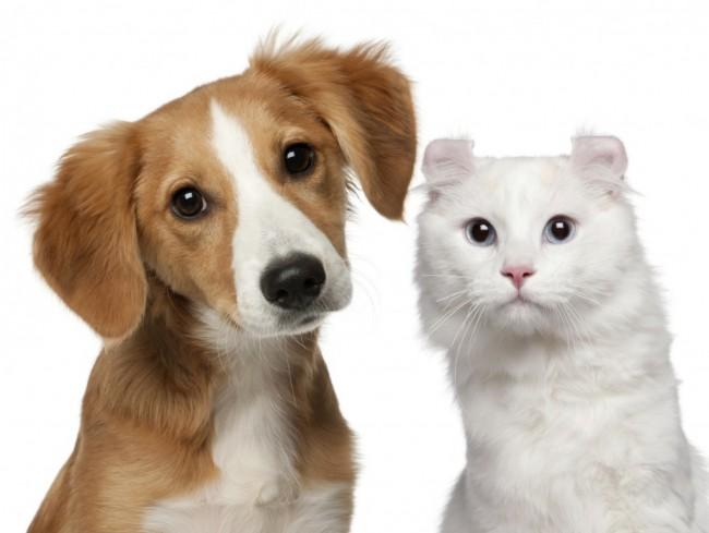 diabetes-en-perros-y-gatos