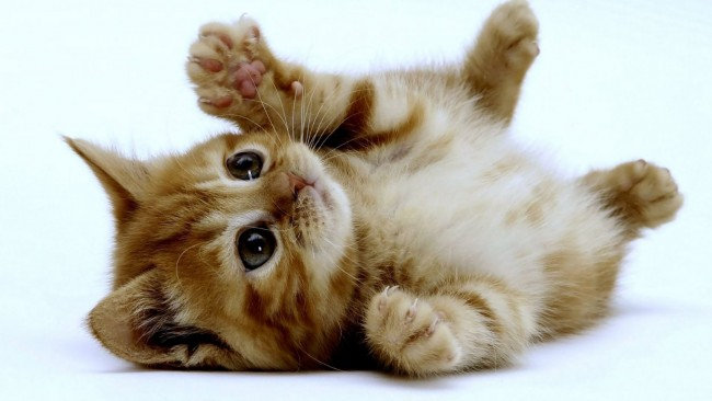 gatitoremios-o-castigos-para-educar-a-nuestros-gatos