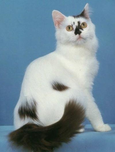 gato-york