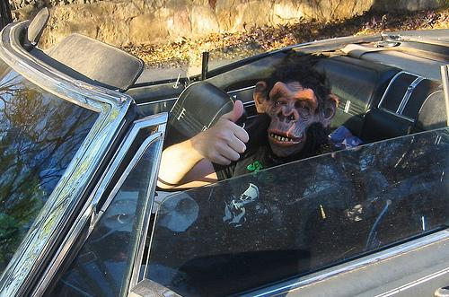 mono_conduciendo