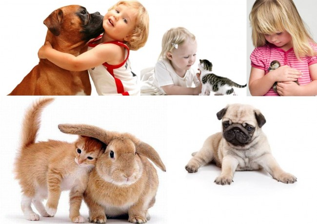 nota10313-animales-ayuda-autismo