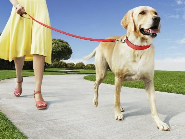 pasear_perro