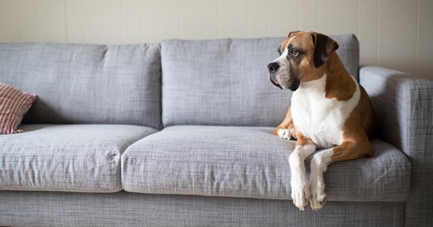 perro-solo-casa