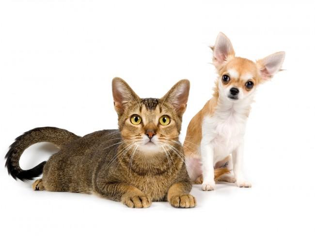 perros-y-gatos-3