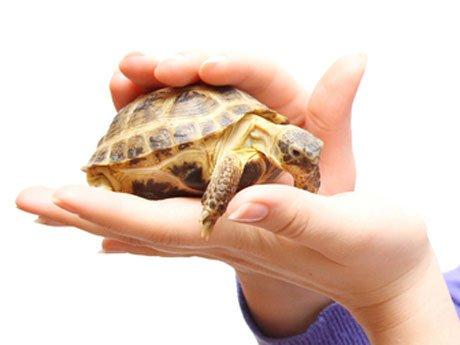 tortuga-mascota.jpg-550x0