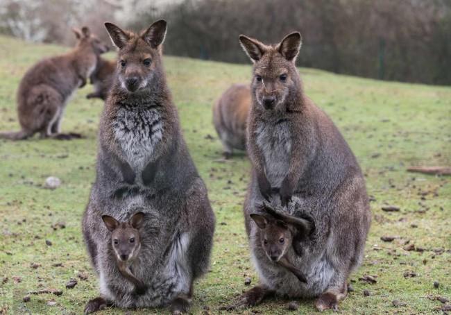 El top 10 de animales en peligro de extinci n en el mundo - Canguro en casa madrid ...