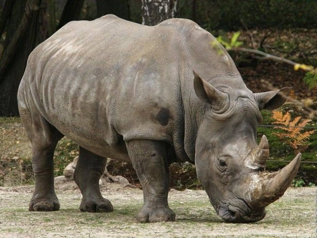 zaaaarinoceronte-660x495