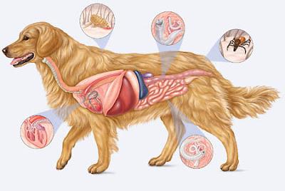 Dog-Parasites