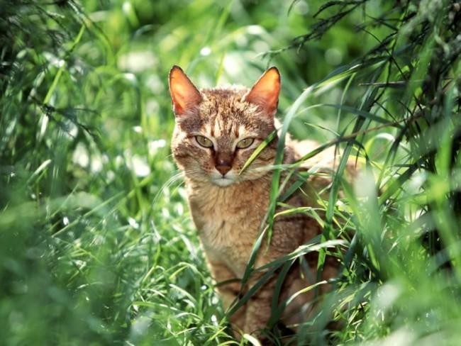 Gato en Jardin_800