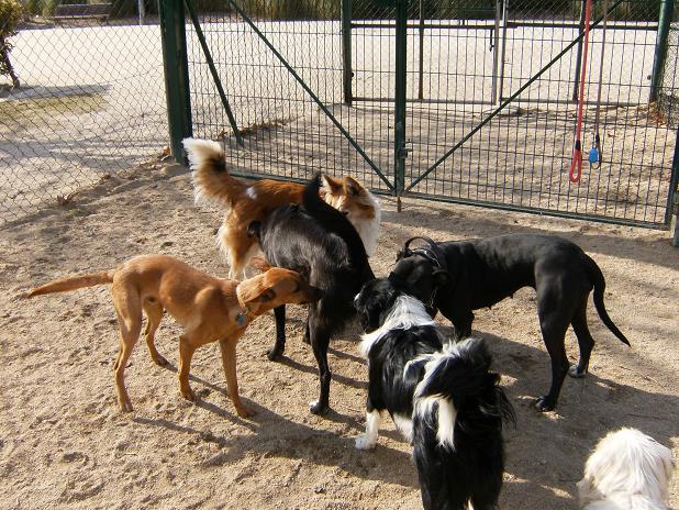 dc3ada-de-perros-016