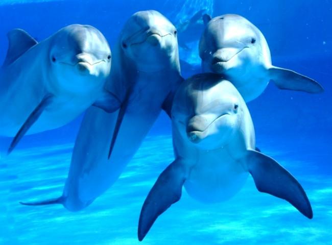 delfines0001