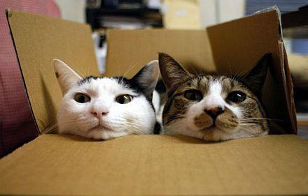 dos-gatos-caja