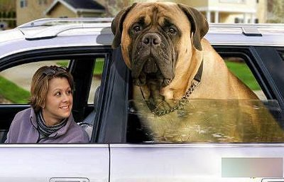 perrosfat_dog3