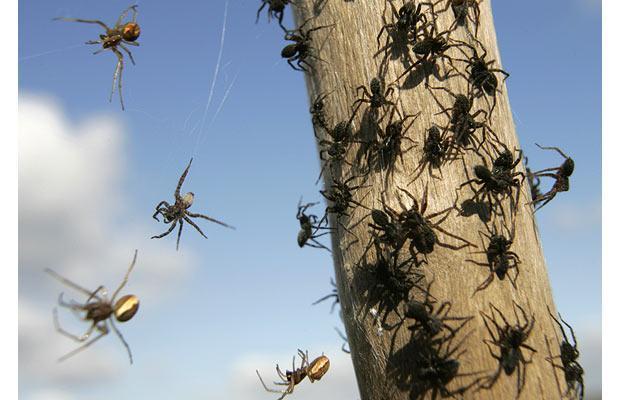 spiders-tree_1007234b