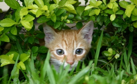 un-jardin-para-gatos