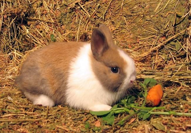 Conejos-enanos-para-niños-consultorio-de-mascotas