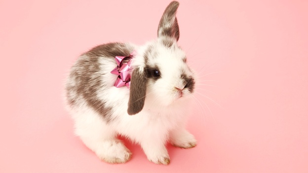 bunny-rabbit-conejo-gift-regalo