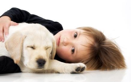 Child with Labrador retriever puppy