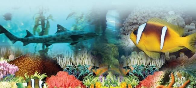 pecesacuoario