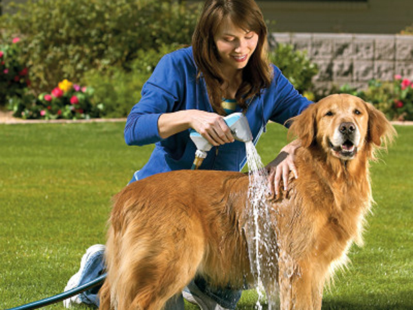 C mo ba ar a un perro sin tener problemas consejos - Como banar a un perro ...