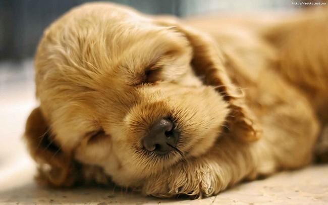 cachorrito durmiendo-744750