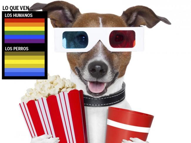 los-perros-ven-en-blanco-y-negro_ampliacion
