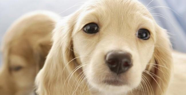 perro-bonito-1