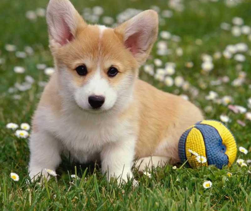 cachorroa