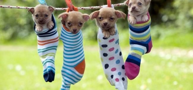 cachorros--700x329