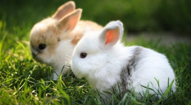 conejafotos-de-conejos-enanos
