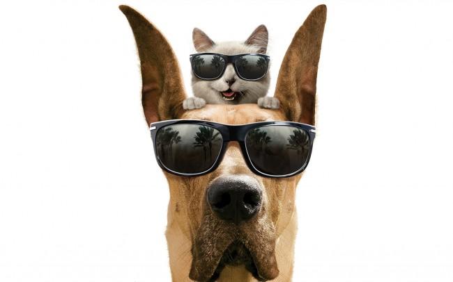 fondocomo-perros-y-gatos-1266