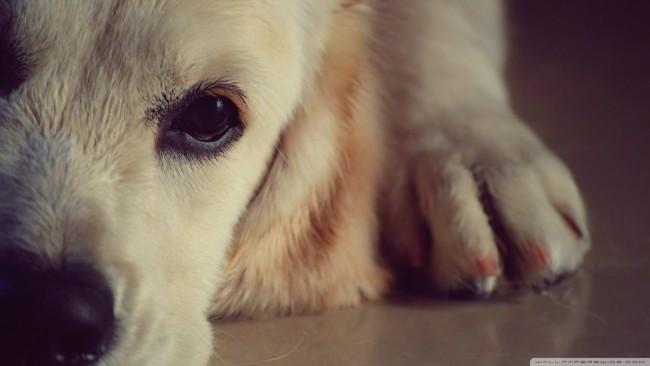 fondos-mascotas-cachorros-wallpapers-6