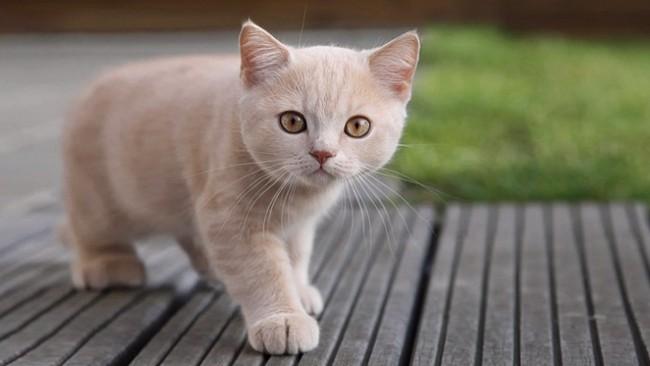 gato-bebe-433