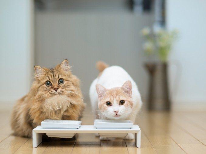 gatos-comiendo
