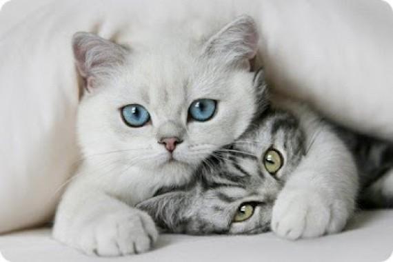 gatos-e1354145032835