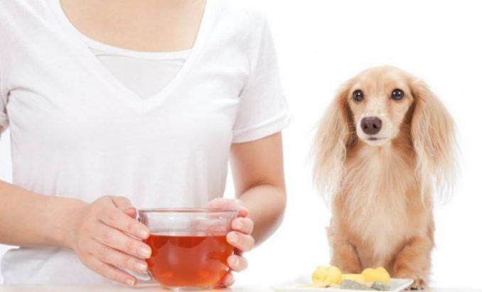 remedios homeopáticos para parásitos estomacales
